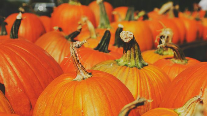 Visit a pumpkin patch or local farm and other fall activities at the link!